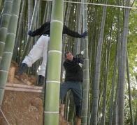 竹林の伐採